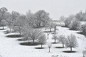 Arbres fruitiers sous la neige dans un verger en hiver, Doubs, France