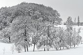 Snow-covered trees in winter, France