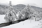 River in a snowy landscape, France