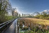 The marsh of Guînes, Pas de Calais, France