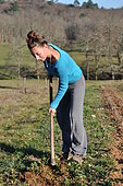 Soil stripping with a weeder, Permaculture tillage, France
