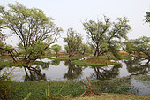 Large pond in the centre of Keoladeo NP with wooded islets reflected in the water supporting nesting birds, North West India