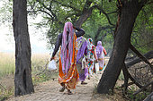 Indian woman in saris on a paved embankment between the marshes Keoladeo NP, North West India