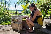 Jeune singe atèle ou singe araignée noir (Ateles paniscus) blotti dans les bras d'une jeune femme près d'une caisse de transport en Guyane Française