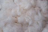 Fibre de coton naturel (Gossypium sp), Guyane Française