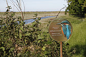 Information panel about the Kingfisher nesting in the Beauport wetland in the commune of Paimpol, Côtes-d'Armor, Brittany, France