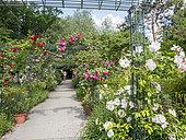 Roseraie, Parc Floral Vincennes, Paris, France
