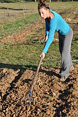 Scratching the soil, tilling the soil in permaculture