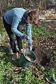 Planting a fruit tree in permaculture