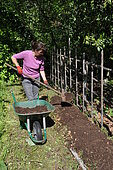 Planting of climbing plants in a lasagne.