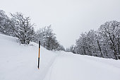 Snow covered road, Route of the Ridges, under the great Hohneck Vosges, France