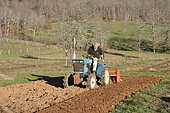 Rotavator with a micro tractor on a plot of land, preparation of the land for permaculture sowing