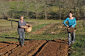 Green manure sowing, Permaculture sowing