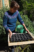 Sowing of climbing plants in slabs, preparation of the seedbed