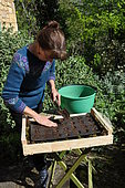 Sowing of climbing plants in slabs, covering the seeds