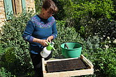 Sowing of climbing plants in slabs, moistening the soil