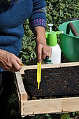 Sowing of climbing plants in slabs, labelling of seedlings