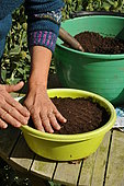 Sowing in trays, tamping the seedbed down
