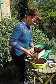 Sowing in trays, cover the seeds with sieved soil