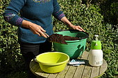Sowing in trays, preparation of the tray (a basin)