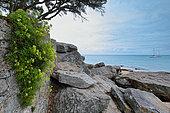 Coastal landscape, Ile de Noirmoutier, Pays de la Loire, France