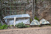 Cold frame in a garden in spring, Moselle, France