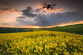 Drone flying over a Rape field (Brassica napus) in bloom at sunset, Opal Coast, France