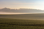 Arable farming, agricultural territories, region of Senlis, Department of Oise, France