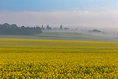 rapeseed cultivation, field crops, agricultural land, Senlis region, Department of Oise, France