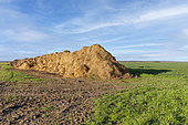 Old straw deposit at the edge of the field, field crops, agricultural territories, Senlis region, Department of Oise, France
