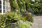 Perennial, african lily, fern, banana (Musa basjoo), in front of a house, France