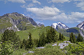 From the arrival of the Champagny aerial lift, exceptional panorama of the Vanoise glaciers, the Grand Bec, the Grande Casse and the peaks over 3000 meters, Champagny en Vanoise in The valley, Champagny-en-Vanoise, Savoie, Auvergne-Rhône-Alpes Region, France