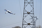 White stork (Ciconia ciconia) nesting on electricity pylons, Couëron, Pays de Loire, France