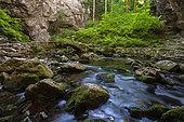 Rak Skocjan valley, Inner Carniola, Slovenia.