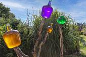 Les Jardins Rocambole, Artistic vegetable and botanical gardens in organic farming, A meeting between art and Nature, colored glass carboys, La Lande aux Pitois, Corps Nuds, Ille-et-Vilaine (35), Brittany, France
