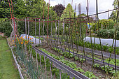 Les jardins Rocambole, Artistic vegetable and botanical gardens in organic farming, A meeting between art and Nature, vegetable garden, cultivation of vegetables, La Lande aux Pitois, Corps Nuds, Ille-et-Vilaine (35), Brittany, France
