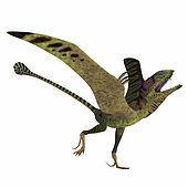 Peteinosaurus reptile mating display. Peteinosaurus was a carnivorous flying pterosaur that lived in Italy during the Triassic Period.
