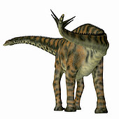 Spinophorosaurus dinosaur, rear view. Spinophorosaurus was a herbivorous sauropod dinosaur that lived in the Jurassic Period of Niger, Africa.