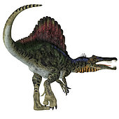 Spinosaurus dinosaur, white background. Spinosaurus was a carnivorous dinosaur that hunted in Africa during the Cretaceous Period.