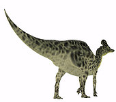 Velafrons dinosaur, rear view on white background. Velafrons was a herbivorous Hadrosaur dinosaur that lived in Mexico during the Cretaceous Period.