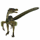Velociraptor dinosaur, front view on white background. Velociraptor was a carnivorous theropod dinosaur that lived in Mongolia, China during the Cretaceous Period.