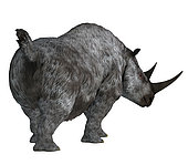 Woolly rhino, rear view on white background. The woolly rhino was a herbivorous rhinoceros that lived in Asia and Europe during the Pleistocene Period.