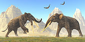 Two bull Stegotetrabelodon animals fight each other for mating rights in the herd during the Miocene Period.