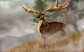 Megaloceros giganteus, commonly called the Irish Elk, stands in deep grass on a foggy hillside. His huge antlers span over half the width of the image as he looks out of the past right at you.