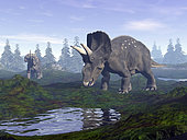 Two Nedoceratops dinosaurs walking to water puddle in the morning light.