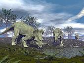 Three Styracosaurus dinosaurs drinking from a nearby lake.