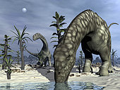 Argentinosaurus dinosaurs grazing in the desert with tempskya and williamsonia plants.