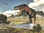 Tarbosaurus running through a stream amongst Tamarix plants.