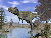 Alioramus dinosaur walking in a stream.