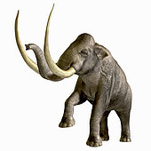 The Columbian Mammoth is one of an extinct megafauna beasts from the Pleistocene Period of Earths history. Its fossils have been discovered in North America and as far south as Nicaragua and Hondurus.